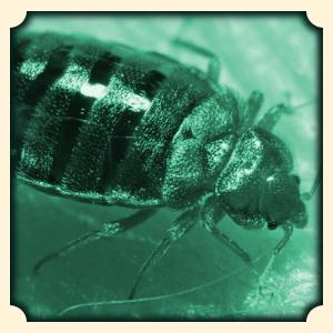 sen owady i robaki sennik