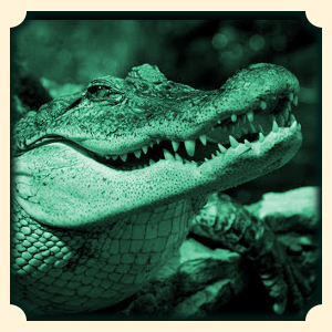 Krokodyl sennik