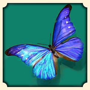 Motyl sennik