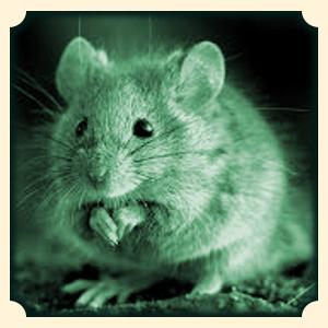 Myszy sennik