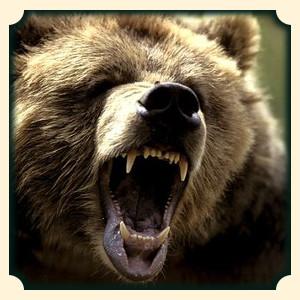 Niedźwiedź sennik