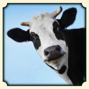 Krowa sennik