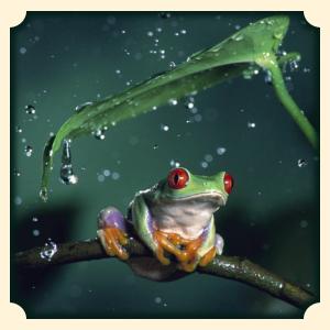 Żaba sennik